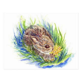 A Baby Cottontail Rabbit - watercolor pencil Postcard