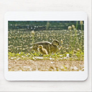 a baby duck with its mom mouse pad