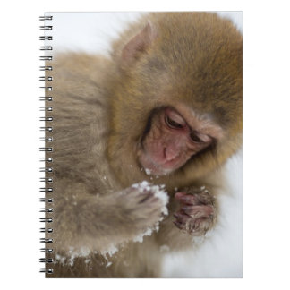 A baby Japanese Macaque (or snow monkey) Notebooks