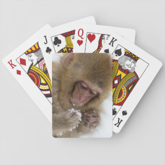 A baby Japanese Macaque (or snow monkey) Playing Cards