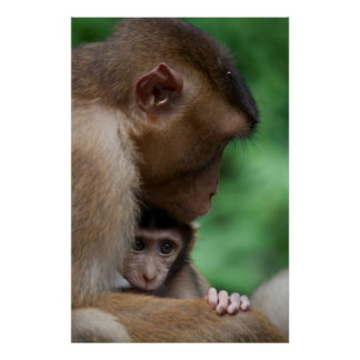 A Baby Macaque And It'S Mother Poster