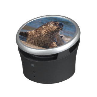 A baby seal coming ashore in Children's Pool Bluetooth Speaker