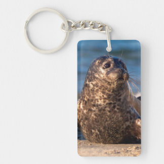 A baby seal coming ashore in Children's Pool Keychain
