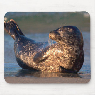 A baby seal lifting it's tail mouse pad