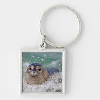 A baby seal surfing keychains