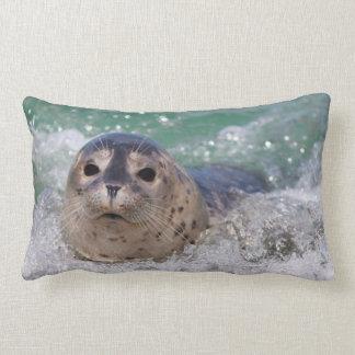 A baby seal surfing lumbar pillow