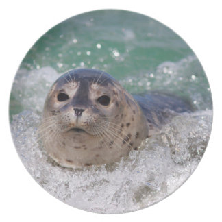 A baby seal surfing plate