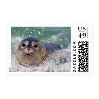 A baby seal surfing stamp
