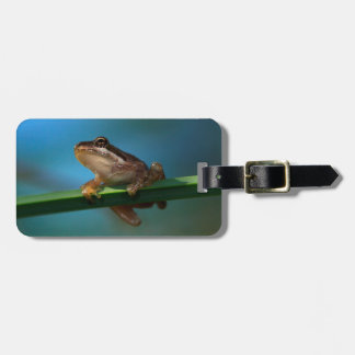 A Baby Tree Frog Luggage Tag