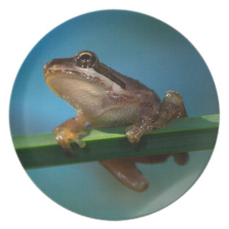 A Baby Tree Frog Melamine Plate