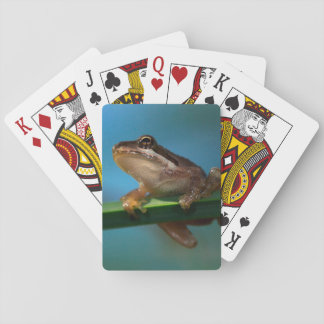 A Baby Tree Frog Playing Cards