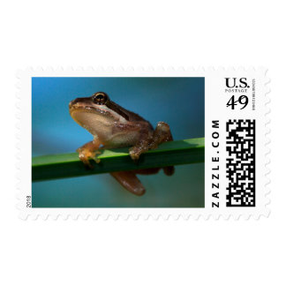 A Baby Tree Frog Postage