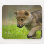 A baby wolf mouse pad