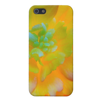 A back-lit, glowing begonia blossom cover for iPhone SE/5/5s