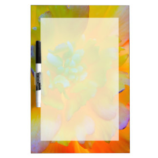 A back-lit, glowing begonia blossom Dry-Erase board