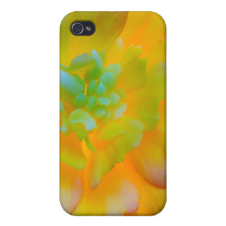 A back-lit, glowing begonia blossom iPhone 4/4S case