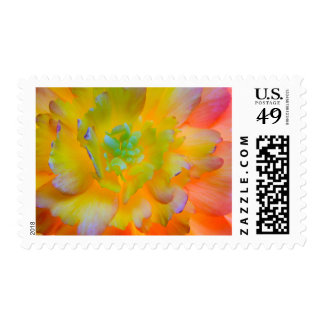 A back-lit, glowing begonia blossom postage stamp