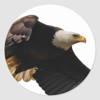 A Bald Eagle Takes to the Sky Classic Round Sticker