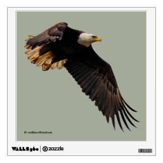 A Bald Eagle Takes to the Sky Wall Decal