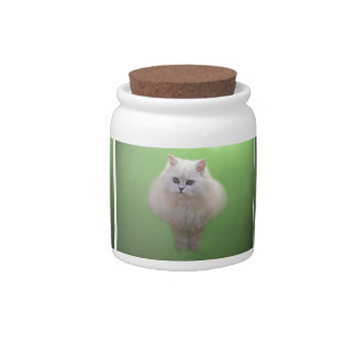 A ball of fluff white kitten candy dish