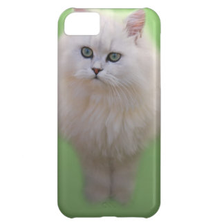 A ball of fluff white kitten iPhone 5C cover