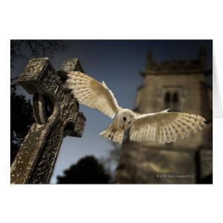 A Barn Owl (Tyto alba) in a graveyard in North Card