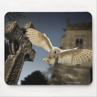 A Barn Owl (Tyto alba) in a graveyard in North Mouse Pad