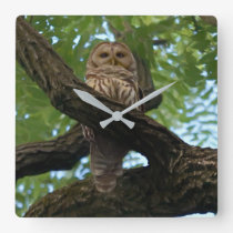 A Barred Owl on a Branch in the Woods Square Wall Clock
