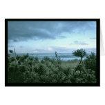 A Beach Pine Evening Greeting Card