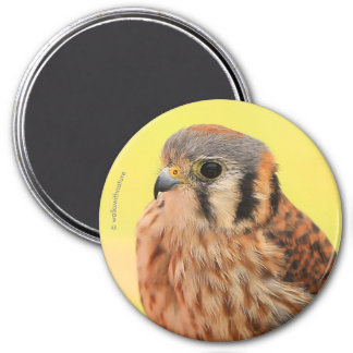 A Beautiful American Kestrel Magnet