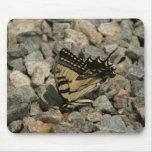 A beautiful butterfly. mousepad