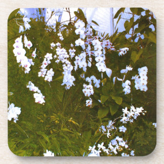 A beautiful display of exotic white orchids coaster