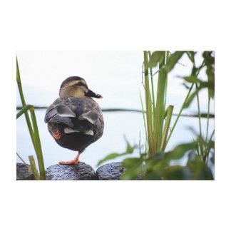 A BEAUTIFUL DUCK.BIRD CANVAS PRINT