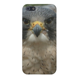 A beautiful falcon iPhone SE/5/5s cover