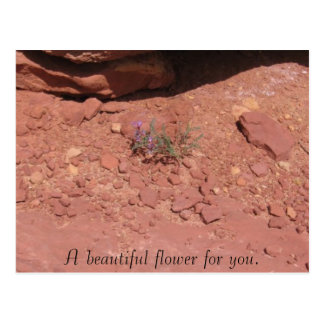 A beautiful flower for you. postcard