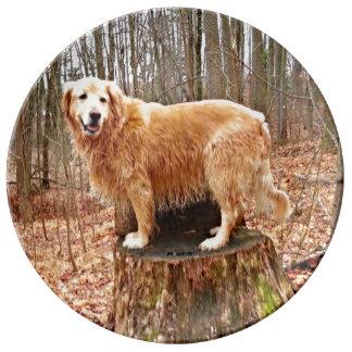 A beautiful Golden Retriever Poses On A Stump Porcelain Plates