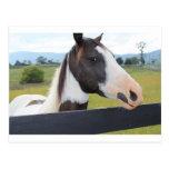 A beautiful horse postcards