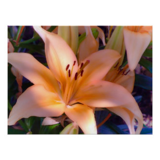 A Beautiful Orange Lily Poster