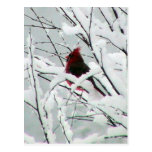 A Beautiful Red Cardinal In The Bushes Covered Wit Postcard