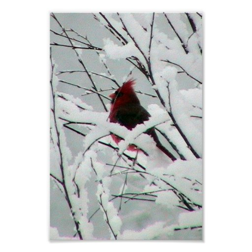 A Beautiful Red Cardinal In The Bushes Covered Wit Poster