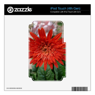 A beautiful red flower skins for iPod touch 4G