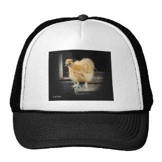 a beautiful Silkie Bantam Chicken picture. Hat