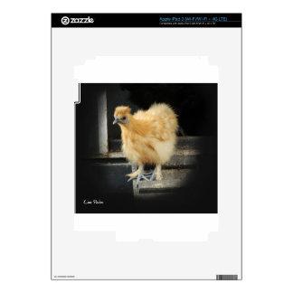 a beautiful Silkie Bantam Chicken picture. iPad 3 Skin
