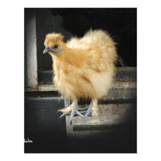 a beautiful Silkie Bantam Chicken picture. Letterhead