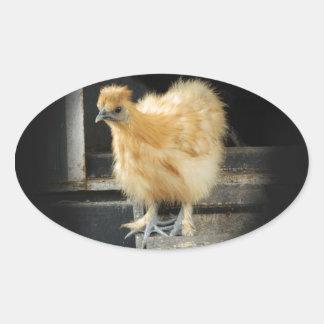 a beautiful Silkie Bantam Chicken picture. Oval Sticker