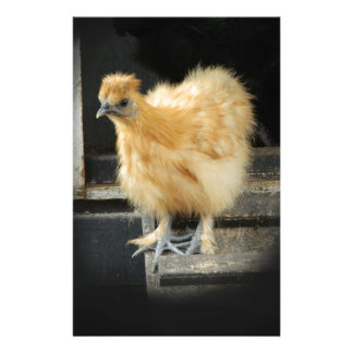 a beautiful Silkie Bantam Chicken picture. Stationery