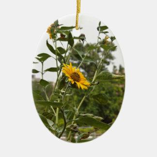 A beautiful sunflower rising high christmas ornament