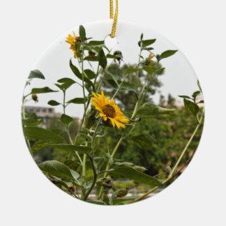 A beautiful sunflower rising high ornaments