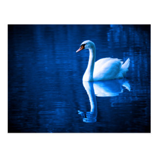 A Beautiful Swan Postcard