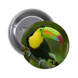 A beautiful toucan bird perched on a branch. button
